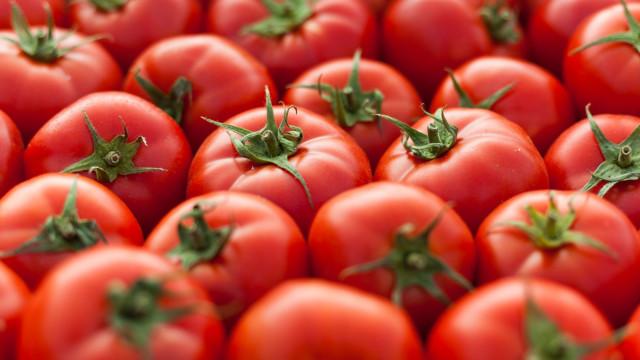 Camião com cebolas e tomates escondia 400 quilos de cocaína e heroína