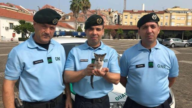 Militares da GNR resgatam gato no Túnel do Marquês e adotam-no