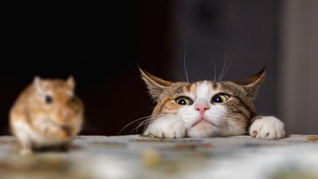 Cidade da Nova Zelândia discute forma de banir todos os gatos