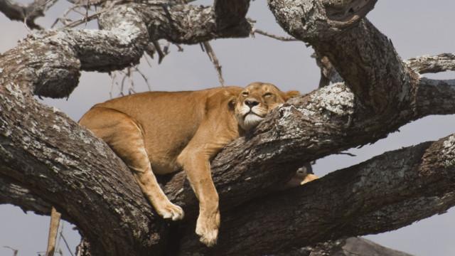Dorme como um leão ou um golfinho? Um especialista em sono explica