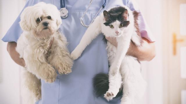 Quatro questões a fazer já ao seu veterinário