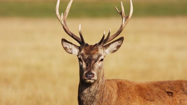 Homem do Missouri que caçava ilegalmente veados condenado a ver o Bambi
