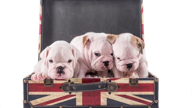Cães e donos de cães vão protestar contra o Brexit no próximo mês