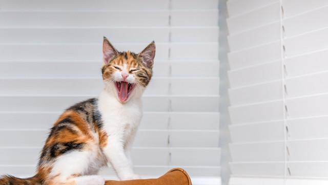 O que diz o seu gato? Entenda cada 'miau'