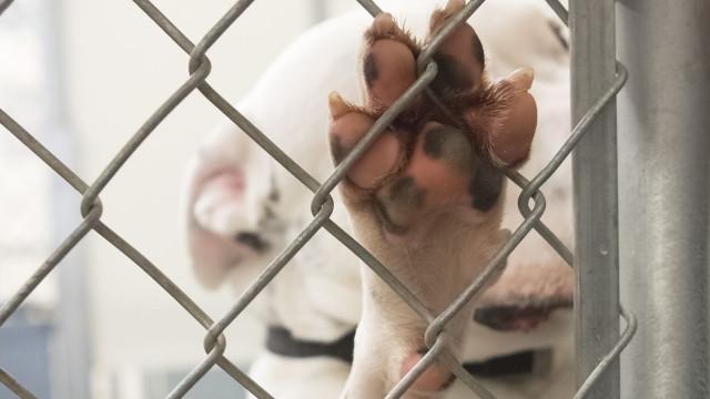 """""""Não existe crueldade em ter animais em abrigo sujo, com lixo e dejetos"""""""