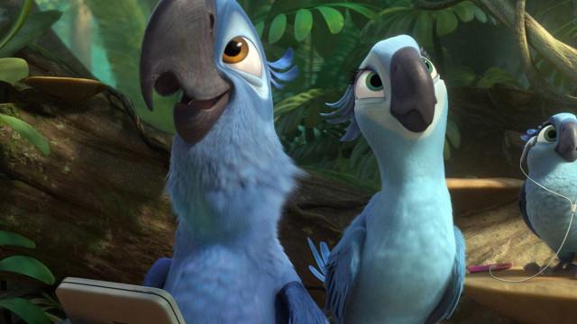 Lembra-se do pássaro azul do filme 'Rio'? Está extinto na natureza