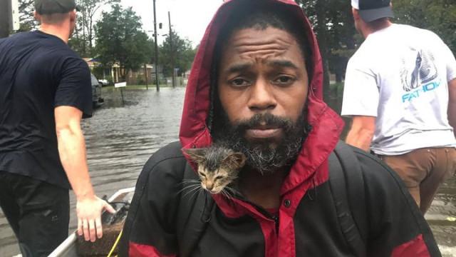 'Surviver', o gatinho que sobreviveu ao furacão Florence
