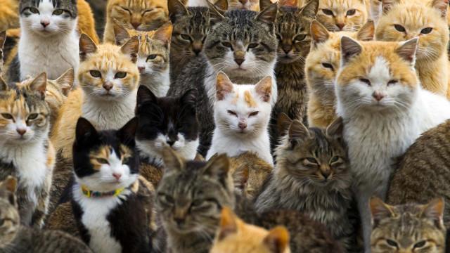 Espreite a surreal e mágica 'Ilha dos Gatos'