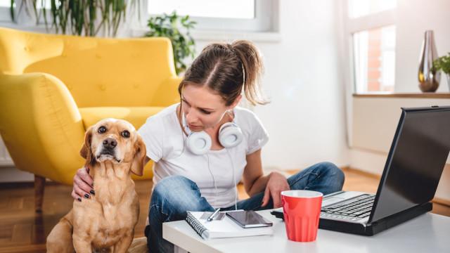 Saiba como o tempo que passa ao telemóvel afeta o seu cão (não é bom)