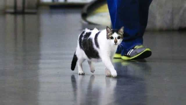Rubinho, o gato que ganhou em tribunal o direito a passear no shopping