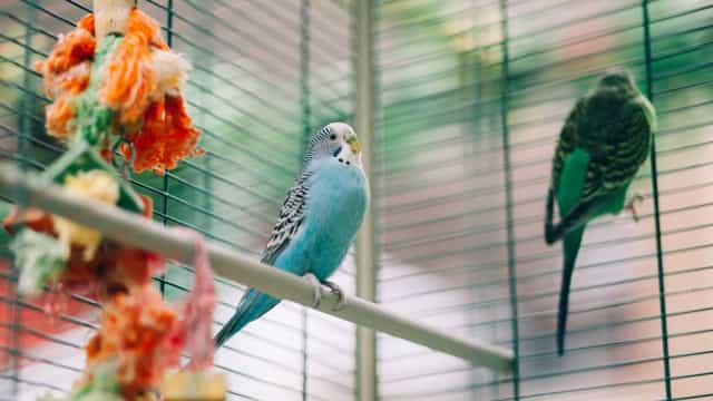 Mais de 150 aves apreendidas na Feira dos Pássaros no Porto