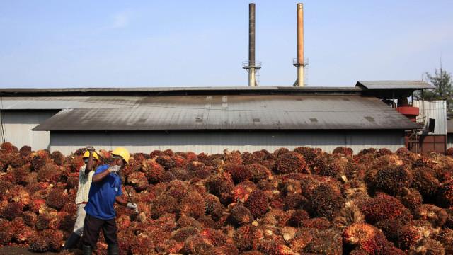 Ativistas da Greenpeace ocuparam refinaria de óleo de palma na Indonésia