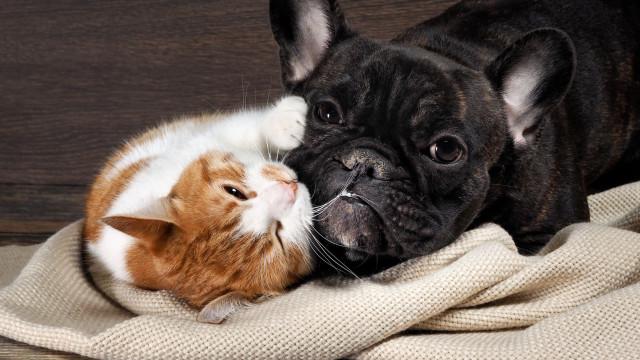 Os gatos são mais espertos, diz estudo, mas os cães…