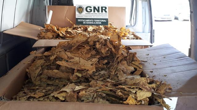Jovem detido com 268 quilos de folhas de tabaco em Idanha-a-Nova