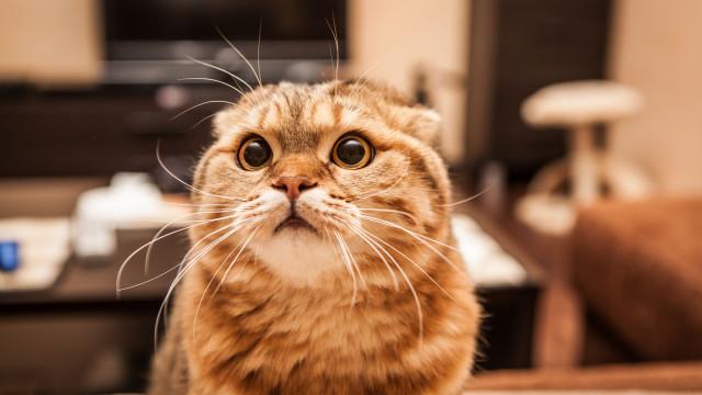 Homem paga mais de 1.300 euros por mês por um estúdio para dois gatos