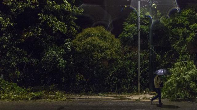 'Os Verdes' alertam para a destruição na serra da Boa Viagem