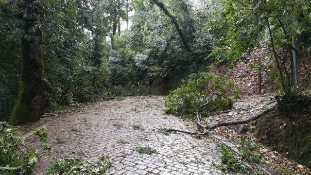 Mealhada aciona Plano Municipal de Emergência