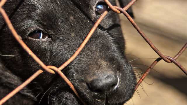 PSP retira sete cães vítimas de maus tratos a mulher de Matosinhos
