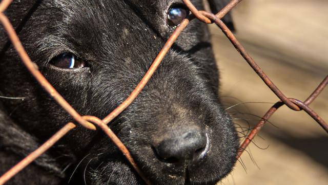 Ministério Público acusa mulher de 30 crimes de maus tratos a animais