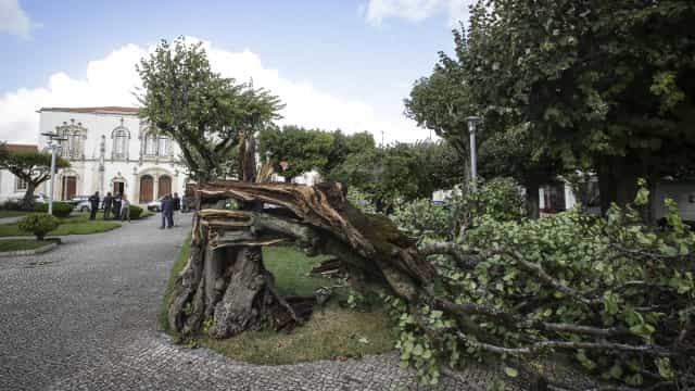 Família vive em casa destruída por árvores desde sábado