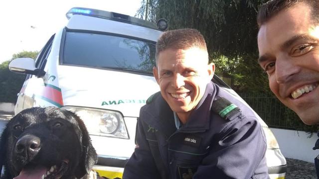 Militares salvam cão perdido de ser atropelado em Sintra e encontram dona