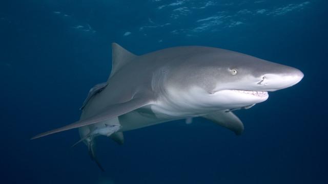 Mulher tropeça e cai num tanque de tubarões na hora de alimentação