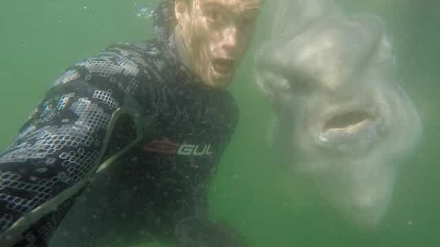 Mergulhadores tiram selfie com peixe-lua na Cidade do Cabo