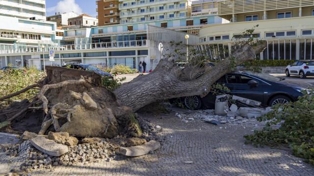 CDS defende apoios para populações afetadas pela tempestade Leslie