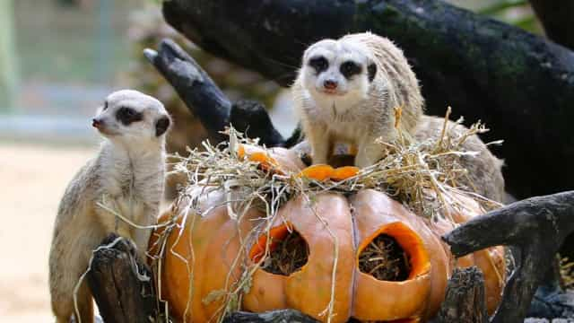Jardim Zoológico prepara Halloween assustadoramente selvagem. Atreve-se?