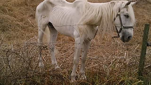 """Cavalo em estado """"esquelético"""" na Moita gera revolta"""