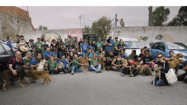 """União Zoófila agradece mobilização """"histórica e inédita"""" pelos animais"""