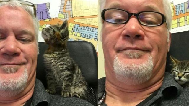 Homem resgata gato que tinha patas coladas ao pavimento de estrada