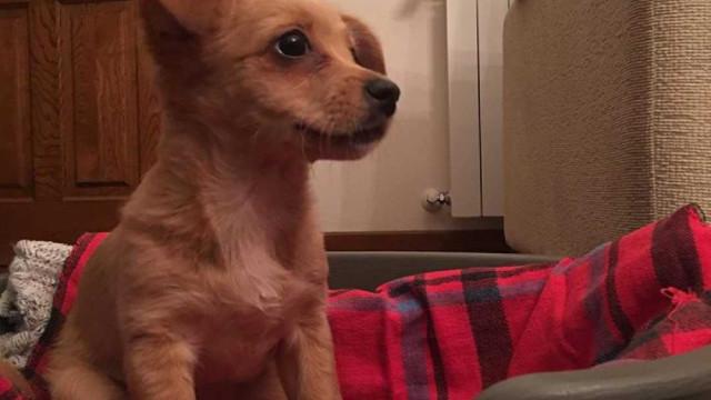 Cadela encontrada em Braga fechada dentro de saco de plástico