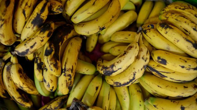 Produção de banana biológica na Madeira regista aumento de 50%