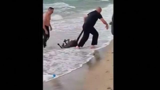 Agentes australianos mergulham no mar para salvar canguru