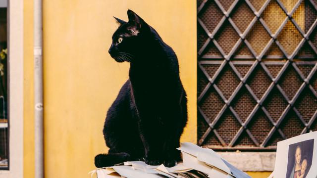 Afinal, onde nasceu a ideia de que o gato preto dá azar?