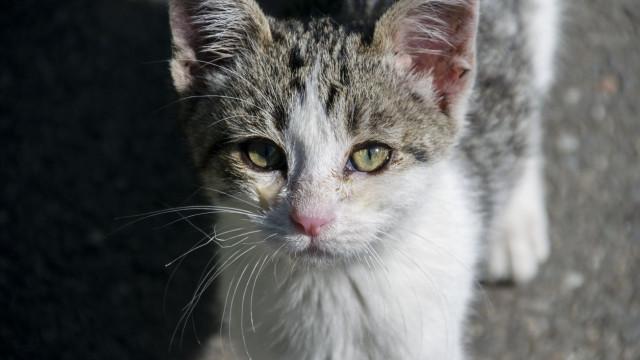 Continuam as denúncias: Há gatos a serem envenenados na Costa da Caparica