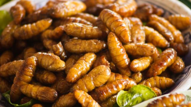 Três argumentos para começar a comer insetos o quanto antes