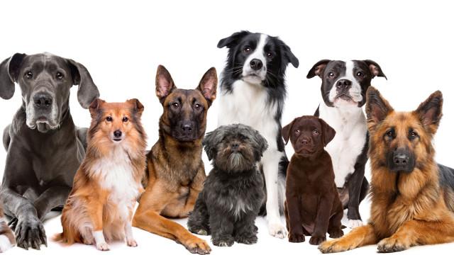 Quatro razões para dar uma alimentação mista ao seu cão