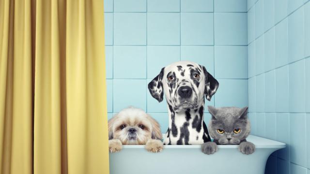 Porque é que os cães adoram água e os gatos odeiam-na?