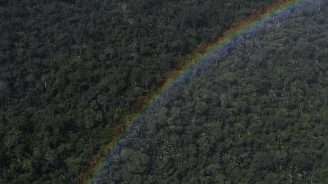 Piloto andou quatro dias ferido pela selva até finalmente ser resgatado