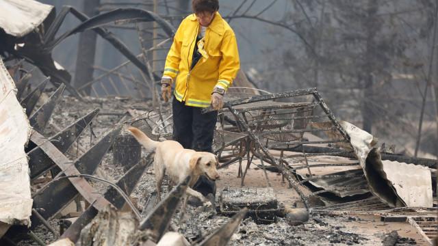 Número de desaparecidos em incêndio na Califórnia sobe para mais de 300