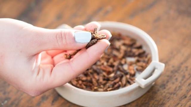 Cadeia de supermercados no Reino Unido vai vender insetos comestíveis