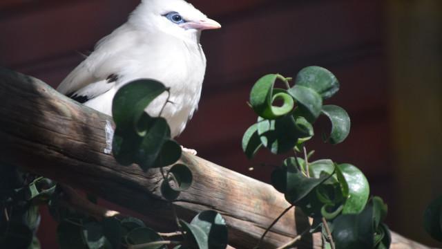 Dê as boas-vindas à nova ave do Jardim Zoológico. Espécie está em perigo