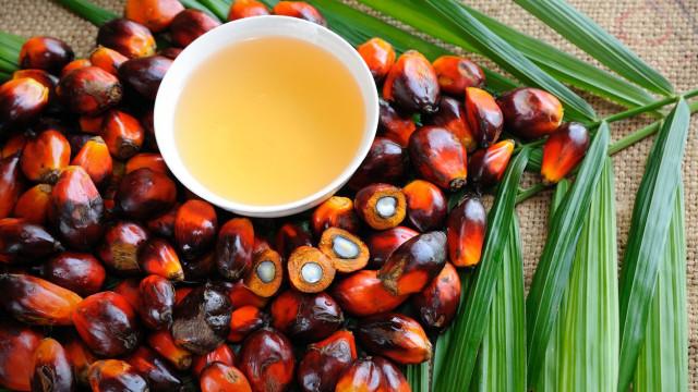 'No meu depósito não'. A campanha contra o óleo de palma no biodiesel