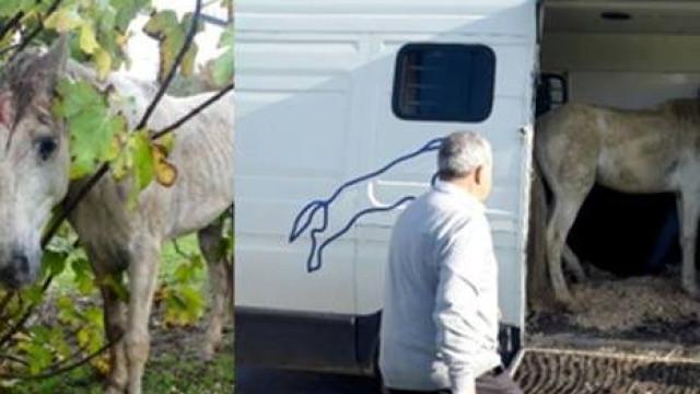 Lisboa: PSP recolhe cavalo ferido e, aparentemente, abandonado
