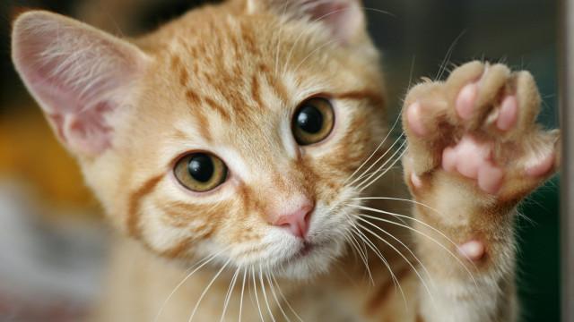 SABIA QUE alguns gatos de rua tem a orelha esquerda cortada?