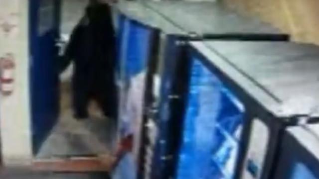 Urso faz visita às instalações da patrulha de trânsito na Califórnia