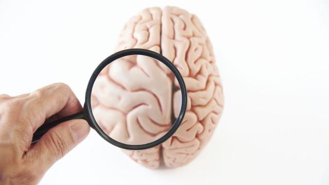 Cientistas descobrem parte do cérebro humano até então incógnita