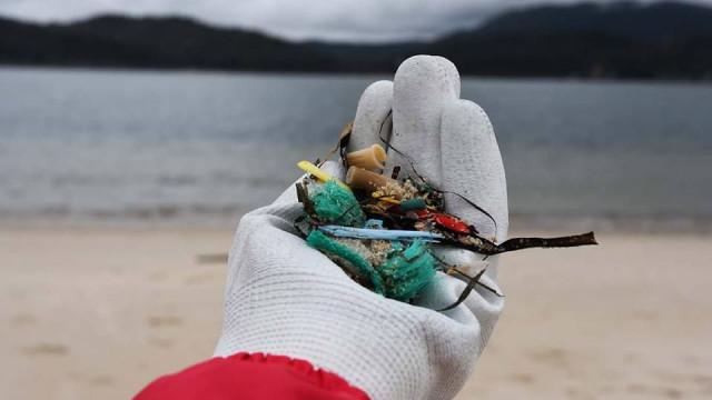 Desde domingo, pradarias marinhas, em Tróia, têm menos 67 quilos de lixo